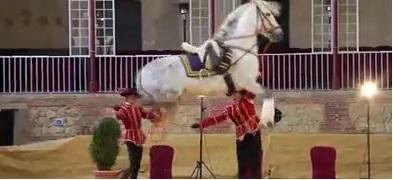 caballo_andaluz