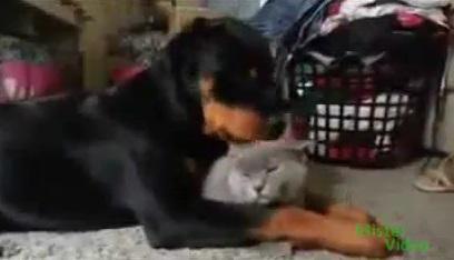 perro_lame_gato