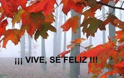 vive_se_feli